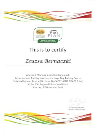 This is to certify Zsuzsa Bernaczki Attended 'Working inside the dog's mind: Behaviour and Training in Action in a Large Dog Training Centre Delivered by Jane Ardern (BSc Hons, DipCAPBT, APDT, COAPE Tutor) at the KCAI Regional Educational Event, Runcorn, 2nd November 2013 (signed by Paul Rawlings KCAI (WGa) Chairman of the KCAI Board