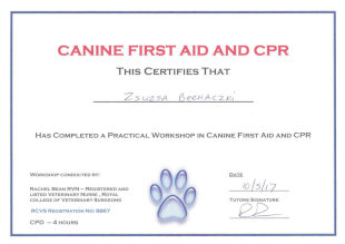 Canine First Aid and CPR, This Certifies That Zsuzsa Bernaczki Has Completed a Practical Workshop in Canine First Aid and CPR, Workshop Conducted by Rachel Bean RVN - Registered and Listed Veterinary Nurse, Royal College of Veterinary Surgeons, RCVS Registration No: 8867, CPD - 4 hours, Date 10/5/17, Tutors Signature