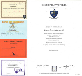 A montage of the certificates and the diploma in dog training that Zsuzsa holds