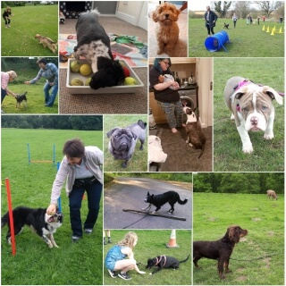 A collage of photoes showing what services The Pawer of Love dog training offers. Each photo is from or refers to puppy classes, beginner obedience classes, one to one training and recall classes.