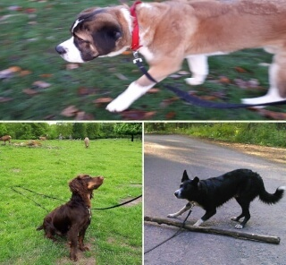 Dogs who were taken for walks by dog trainer and dog walker Zsuzsa.