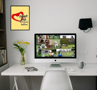 A computer showing the dog services background of the Pawer of Love dog training and behaviour
